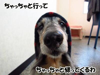 d0020869_7252614.jpg