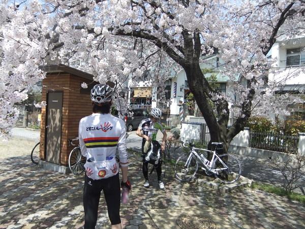 春がやってまいりましてサイクリングに行ってまいりました_b0217782_2023478.jpg