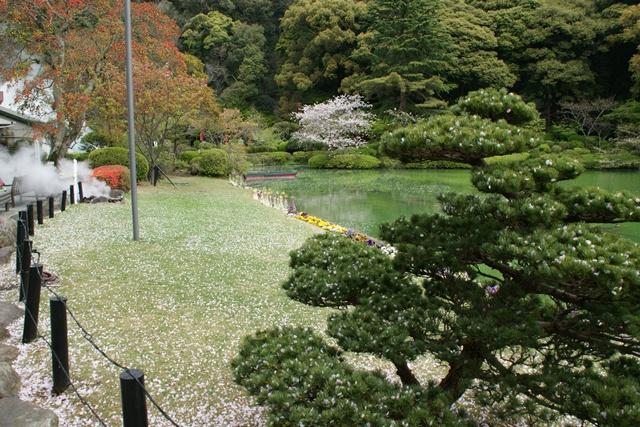 素敵な桜をさがして・・・地獄の桜、王子動物園の桜、青い森鉄道、九州の桜、お城の桜(6/7)_d0181492_211405.jpg