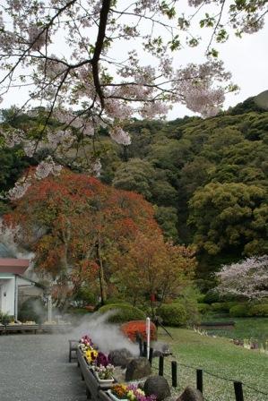 素敵な桜をさがして・・・地獄の桜、王子動物園の桜、青い森鉄道、九州の桜、お城の桜(6/7)_d0181492_21143592.jpg