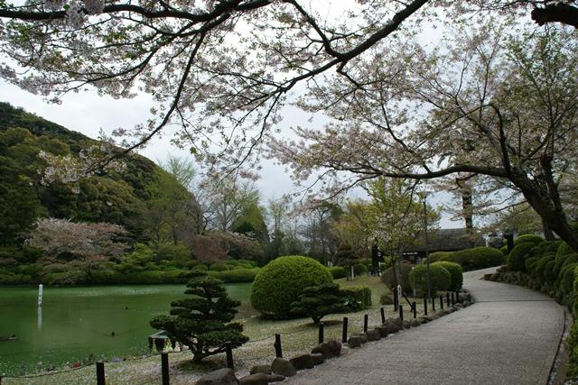 素敵な桜をさがして・・・地獄の桜、王子動物園の桜、青い森鉄道、九州の桜、お城の桜(6/7)_d0181492_21144597.jpg