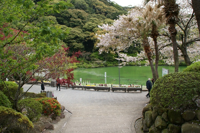 素敵な桜をさがして・・・地獄の桜、王子動物園の桜、青い森鉄道、九州の桜、お城の桜(6/7)_d0181492_2114556.jpg