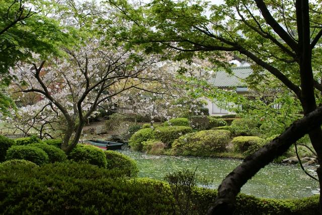 素敵な桜をさがして・・・地獄の桜、王子動物園の桜、青い森鉄道、九州の桜、お城の桜(6/7)_d0181492_21151921.jpg