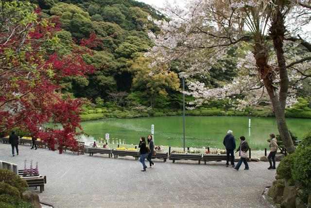 素敵な桜をさがして・・・地獄の桜、王子動物園の桜、青い森鉄道、九州の桜、お城の桜(6/7)_d0181492_2115779.jpg