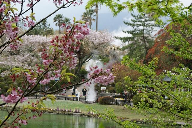 素敵な桜をさがして・・・地獄の桜、王子動物園の桜、青い森鉄道、九州の桜、お城の桜(6/7)_d0181492_21485193.jpg
