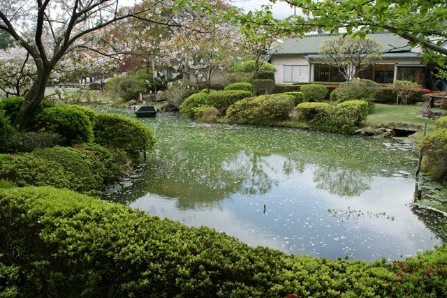 素敵な桜をさがして・・・地獄の桜、王子動物園の桜、青い森鉄道、九州の桜、お城の桜(6/7)_d0181492_21501551.jpg