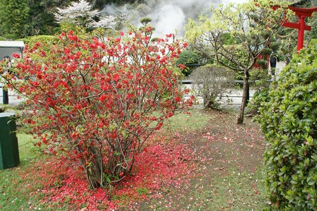 素敵な桜をさがして・・・地獄の桜、王子動物園の桜、青い森鉄道、九州の桜、お城の桜(6/7)_d0181492_21502972.jpg