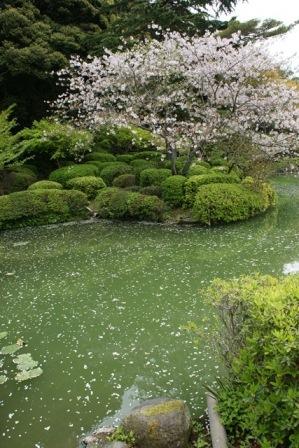 素敵な桜をさがして・・・地獄の桜、王子動物園の桜、青い森鉄道、九州の桜、お城の桜(6/7)_d0181492_21504773.jpg
