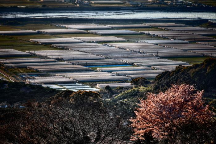 HDR紀行 in 河内の一本桜_e0135098_5144135.jpg
