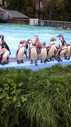 ペンギンって不思議だよね。_d0096499_1538289.jpg