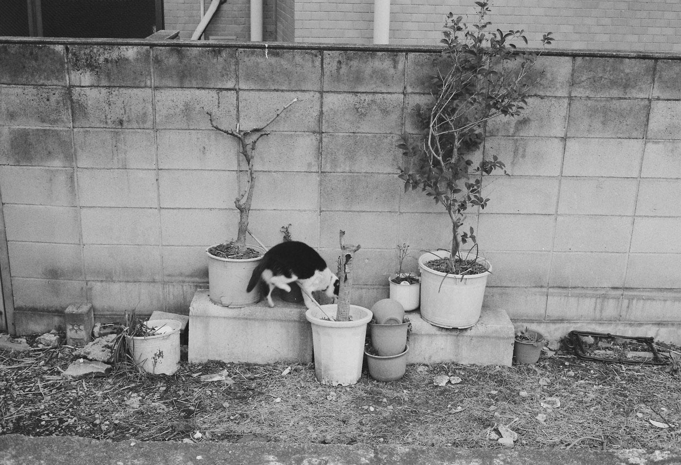 湊の猫。_c0120903_233888.jpg