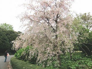 江戸城散歩(江戸の仲間)_c0187004_23394726.jpg