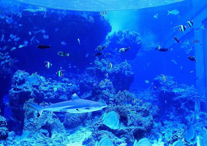"""沖縄 """"美ら海水族館"""" NO.2_a0140608_6452736.jpg"""