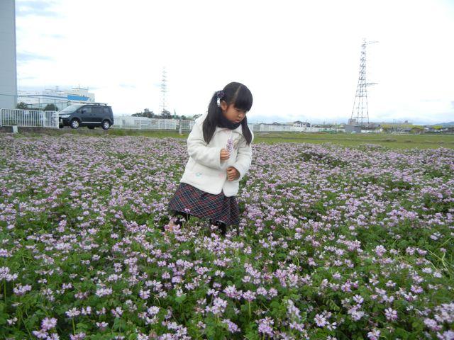4/21(土) 三島江へ『菜の花』と『レンゲ』を見に行って来ました〜_a0059812_2117941.jpg