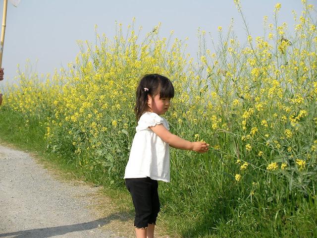 4/21(土) 三島江へ『菜の花』と『レンゲ』を見に行って来ました〜_a0059812_2153542.jpg
