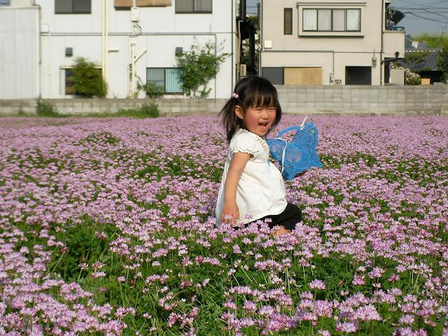4/21(土) 三島江へ『菜の花』と『レンゲ』を見に行って来ました〜_a0059812_22223791.jpg