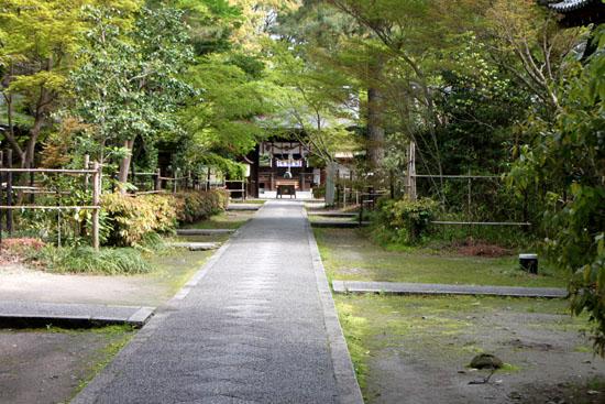 梨の木神社 山吹満開_e0048413_2058321.jpg