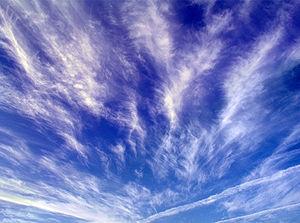 ついに「ケム鳥」まで登場か?:お尻から飛行機雲を出して飛ぶ鳥_e0171614_125362.jpg
