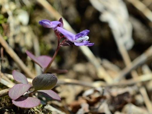 2012年4月22日(日):春が一気にやってきた![中標津町郷土館]_e0062415_17523141.jpg
