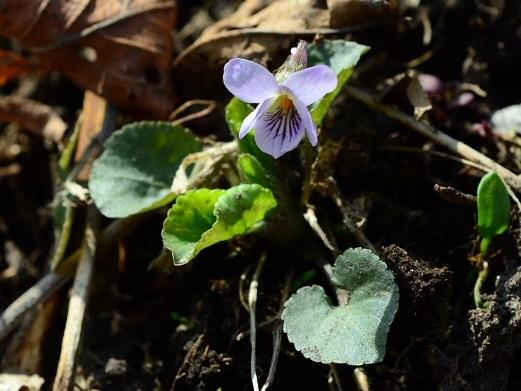 2012年4月22日(日):春が一気にやってきた![中標津町郷土館]_e0062415_1752424.jpg