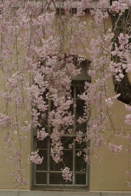 風情漂う 京都府庁旧本館_e0171336_2110467.jpg