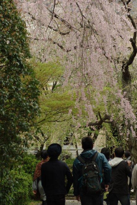 風情漂う 京都府庁旧本館_e0171336_2193149.jpg