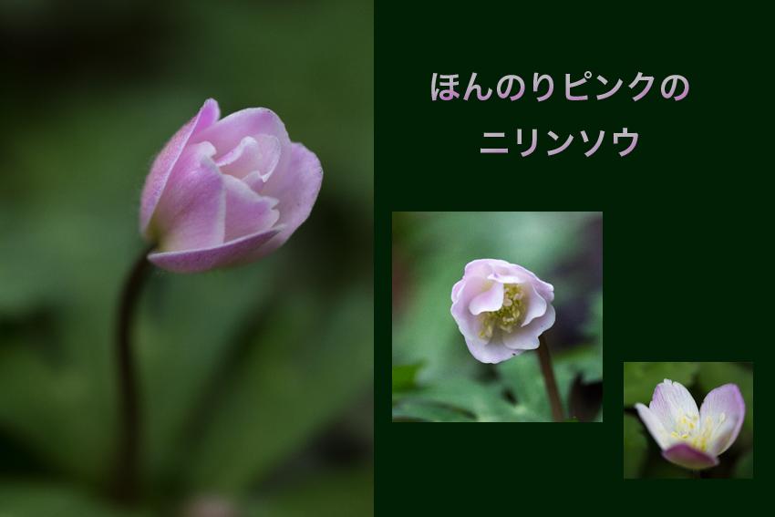 b0167256_182732.jpg