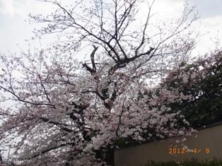 京都~嵯峨中ノ島公園散策_e0195766_22215013.jpg