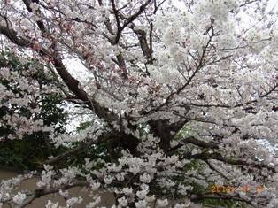 京都~嵯峨中ノ島公園散策_e0195766_2224103.jpg