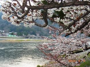京都~嵯峨中ノ島公園散策_e0195766_22242413.jpg