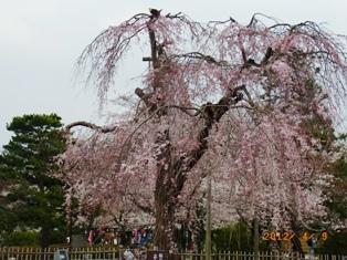 京都~嵯峨中ノ島公園散策_e0195766_22244055.jpg