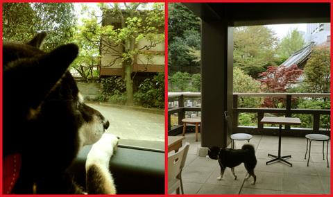 「寺カフェ」へ行こう。神谷町・光明寺で、昼旅気分。_e0236072_1628516.jpg