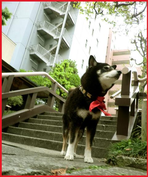 「寺カフェ」へ行こう。神谷町・光明寺で、昼旅気分。_e0236072_16311865.jpg