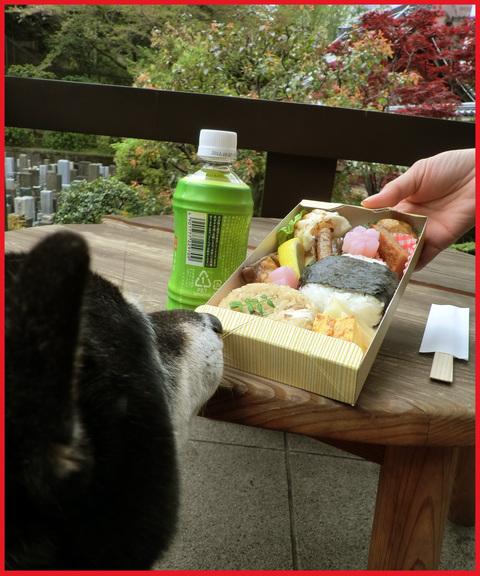 「寺カフェ」へ行こう。神谷町・光明寺で、昼旅気分。_e0236072_16373069.jpg