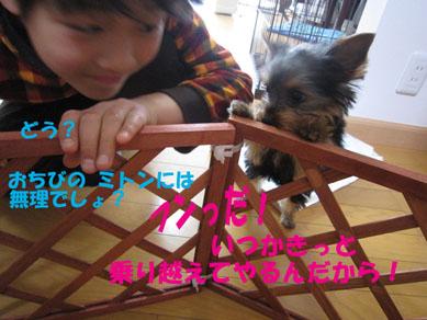 「ミトちくりん」_e0125894_15842.jpg