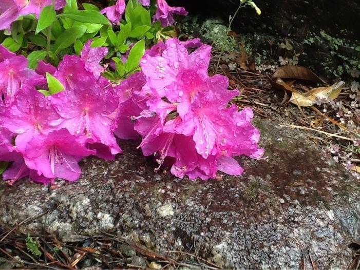春雨に濡れた花達_c0177195_12392475.jpg