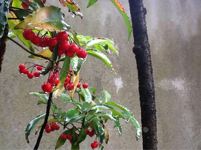 春雨に濡れた花達_c0177195_12392581.jpg