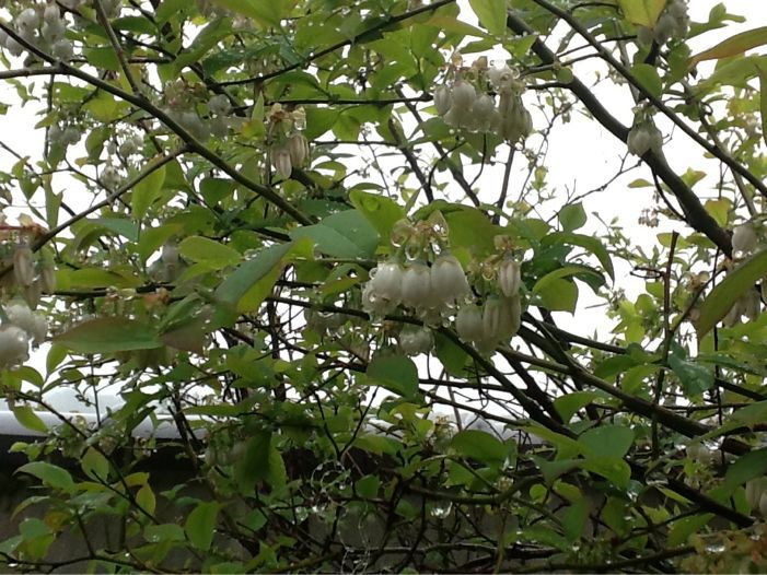 春雨に濡れた花達_c0177195_12392582.jpg