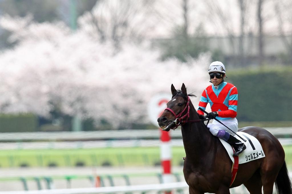 2012年4月21日 福島牝馬S_f0204898_0124959.jpg