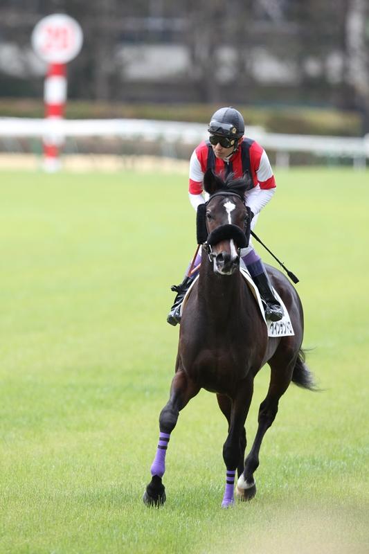 2012年4月21日 福島牝馬S_f0204898_053111.jpg