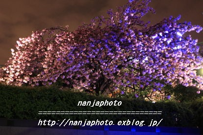 e0268999_1311267.jpg