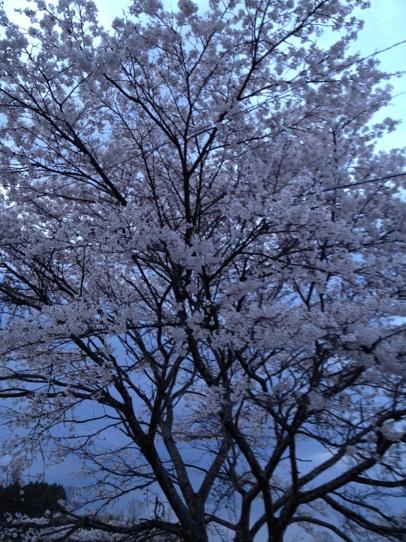 過ぎてく春_f0073301_18183662.jpg