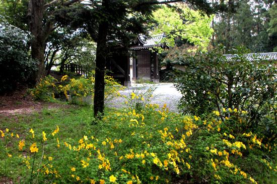 京都御苑でもヤマブキが_e0048413_1946274.jpg