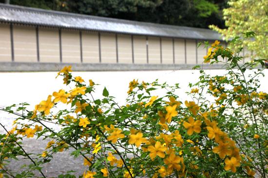 京都御苑でもヤマブキが_e0048413_1946414.jpg