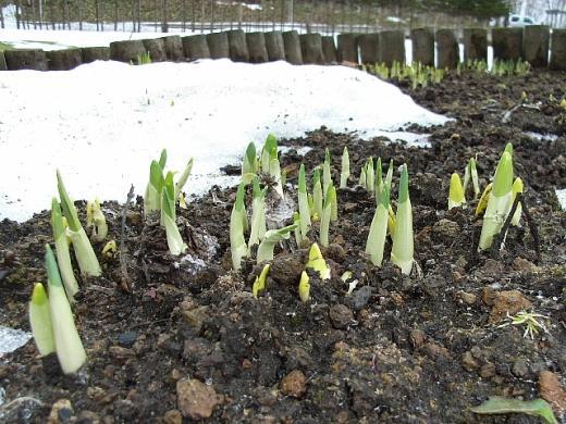 2012年4月23日(月):予報どおりに崩れた天気[中標津町郷土館]_e0062415_17385999.jpg