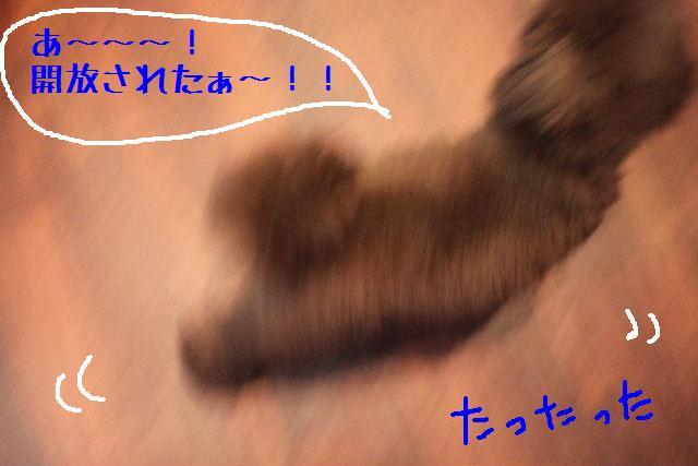 b0130018_1472776.jpg