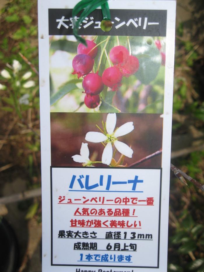 「果実苗」と「長靴」☆_a0125419_1113324.jpg