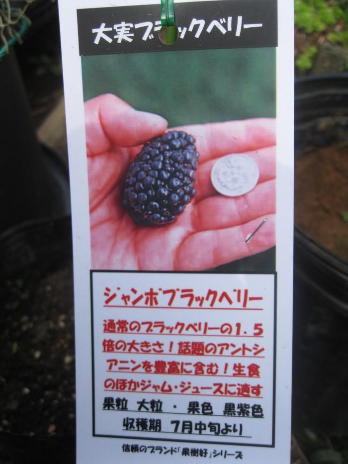 「果実苗」と「長靴」☆_a0125419_112513.jpg