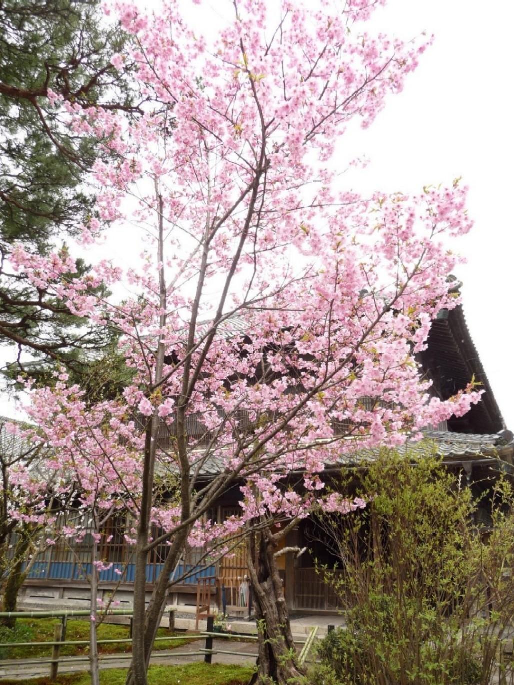 ~ 桜めぐり ~_e0135219_1316932.jpg