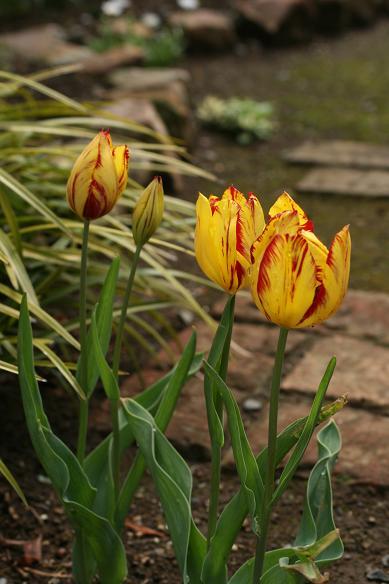 春  マイガーデン(花)_d0150720_85621100.jpg